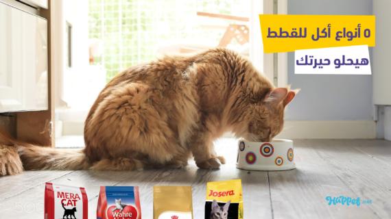 أفضل 6 انواع دراي فود للقطط في مصر ( اكل القطط )