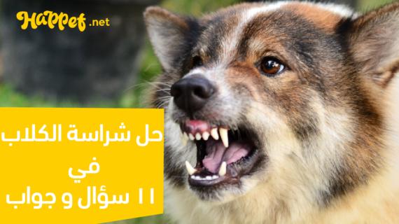 حل شراسة الكلاب في 11 سؤال و جواب