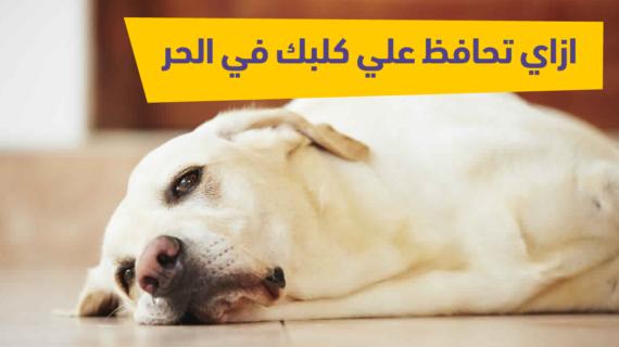 ازاي تحافظ علي كلبك في الحر