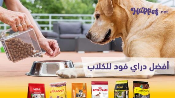 دليلك الشامل لاختيار اكل الكلاب في مصر 2019 + الأسعار
