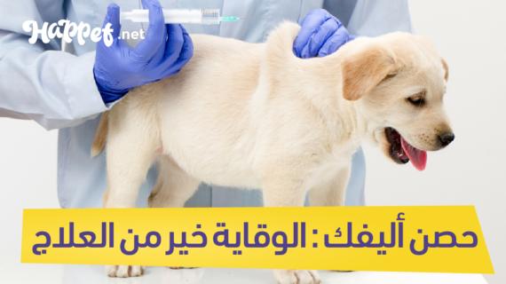تطعيمات الكلاب و أسعارها : الوقاية خير من العلاج دليلك الشامل