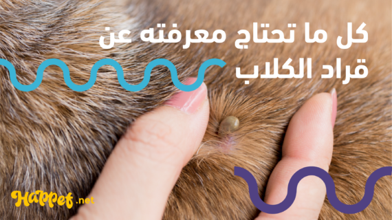 علاج القراد للكلاب والوقاية منه وطرق الإصابة دليل شامل 2019