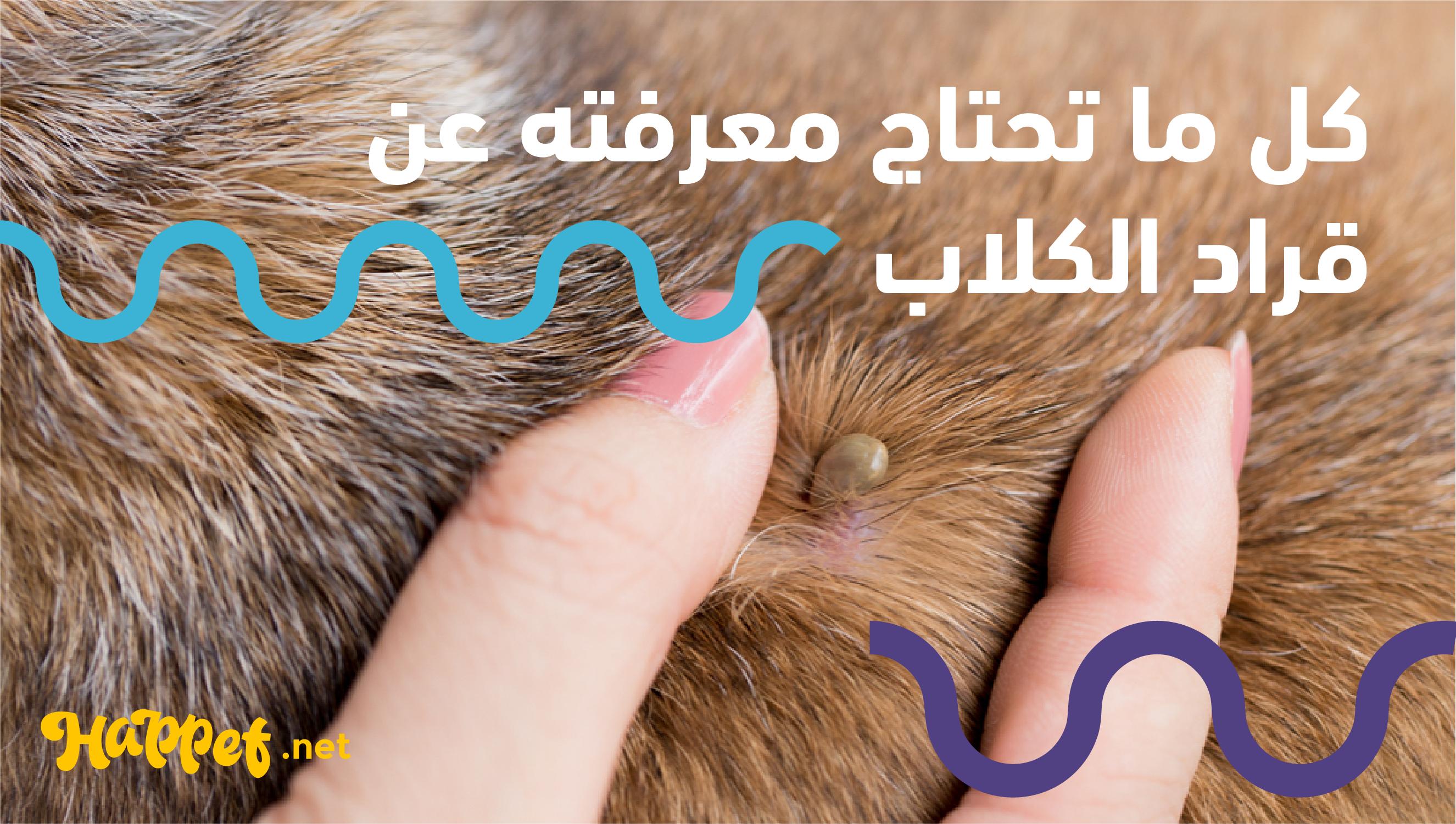 علاج القراد للكلاب دورة حياة قراد الكلاب دليل شامل عن حشرة القراد 2020 Happet