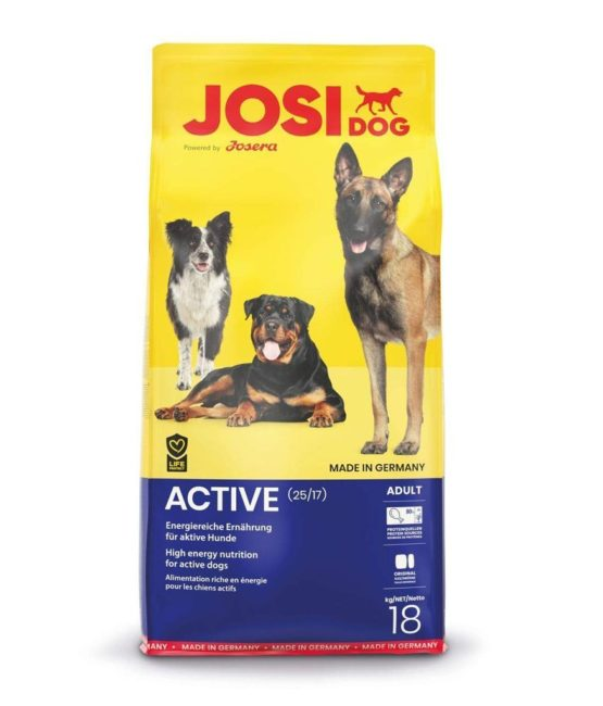 josi-dog-active