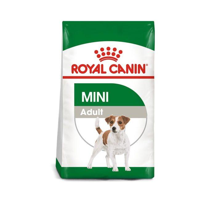 royal-cain-mini-adult